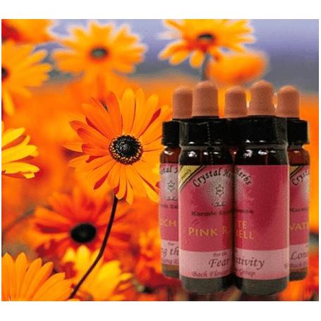 Bachblüten- Karma Blüten Essenz -Yellow Rattle