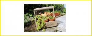 Garten & Außen Dekoration