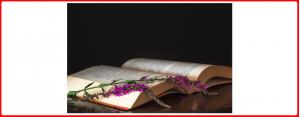 Bücher - Aromen, Essenzen, Düfte & Öle